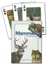 Mammals of the Midwest Cards (price includes US S&H)